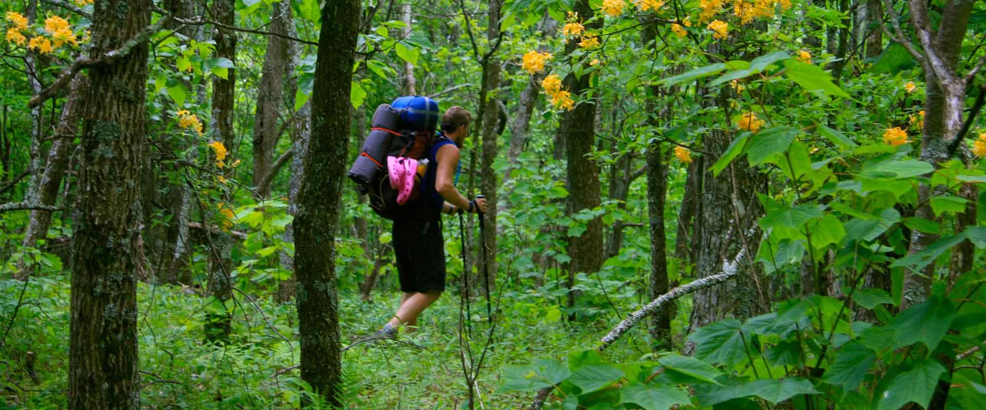 Appalachian Trail – Virginia\'s Mountain Playground™