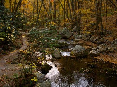 trout stream in fall