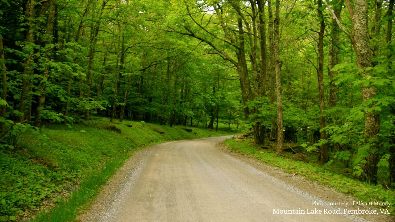 Forest road on Mountain Lake, Giles County, Va